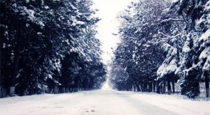 Chilly_Winter_4