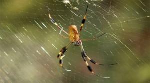 spiders_get_rid_of_pesky_eight_legged_friends_in_3_easy_steps